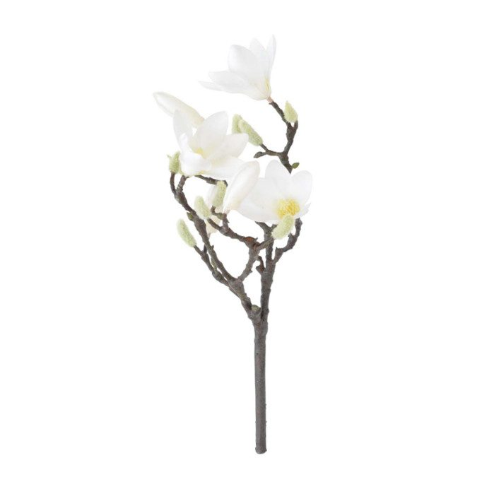 Finnmari Magnolianoksa
