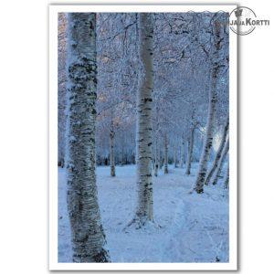 Talviset koivut