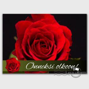 Onneksi olkoon ruusut