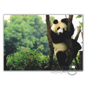 Panda puussa